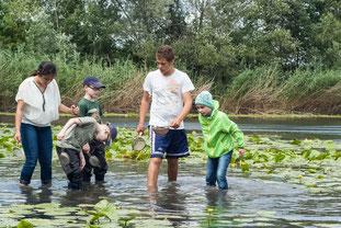 Im See wurde u.a. Libellenlarven, Krebse und Schnecken gefunden