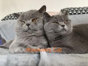 Astuce & Camilla - Heureux parents