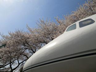 ●国産中型旅客機として活躍したYS-11。コックピット内の見学もできます。背景の三鷹通りの桜も満開です