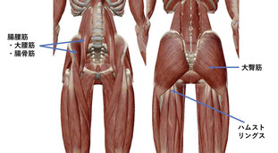 しんそう福井武生では、手足のバランスから骨盤の歪みも改善します。