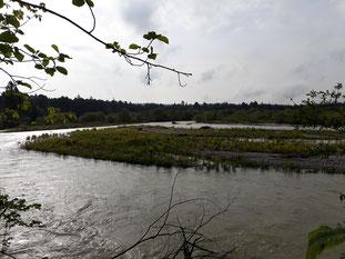 Wiederansiedlungsstandort am 13.05.2019: ein kleineres Hochwasser erreicht die höheren Bereiche der Insel nicht, Abfluss: 103 m³/s, Foto: Fabian Unger