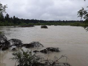 Wiederansiedlungsstandort am 23.05.2019: das Hochwasser überspült die gesamte Insel, Abfluss ca. 196 m³/s, Foto: Fabian Unger