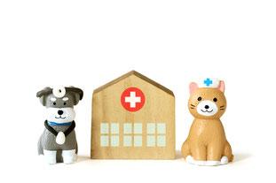 犬猫の出入国検疫手続 行政書士七野国際法務事務所