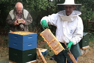 Camping Sites & Paysages  Les Saules à Cheverny - Loire Valley - Découverte de l'apiculture, protection des abeilles et des ruches