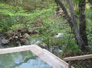 露天風呂「川の湯」も新緑の季節を迎えました
