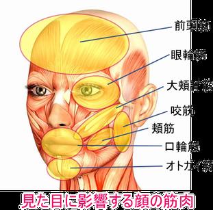 松山市の表情筋整体は、小顔を作りアンチエイジングに役立ちます。