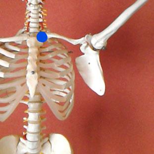 肩 骨格の始まり