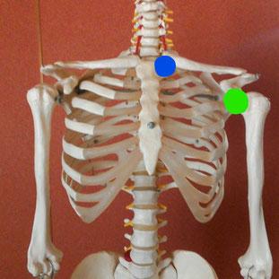 骨格の写真
