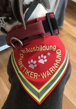 Diabetiker, Diabetes, Hund, Diabetiker-Warnhund, Diabetiker Halstuch