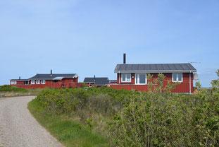 Typisch dänische Ferienhäuser an der Nordsee. Foto: Visit Rømø Tønder/PR