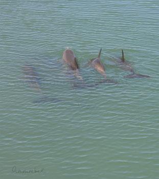 honourebel basis stroemung engagement delphine im meer