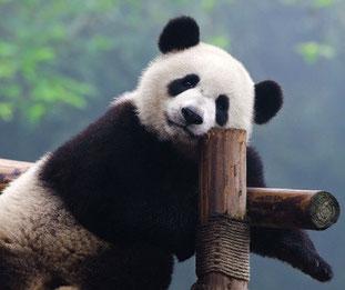 Panda Update von Google