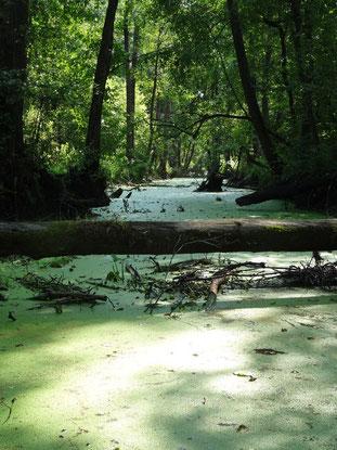 Река Сеньга, Творческая лаборатория НБ