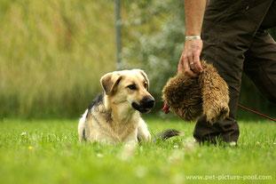 Durch das Schulen der Selbstkontrolle des Hundes…