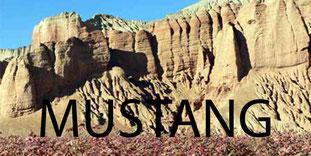 trek au Mustang