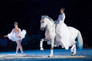 Nacht der Pferde Wels