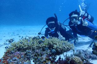 石垣島でのんびりダイビング「竹富島でダイビング」ヒートハートクラブ