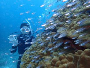 石垣島でのんびりダイビング「パワースポット」ヒートハートクラブ