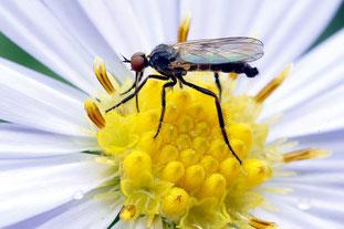 Mückenstiche, Schutz vor Mücken, Mückenschutz, Stechmücke, Mücke