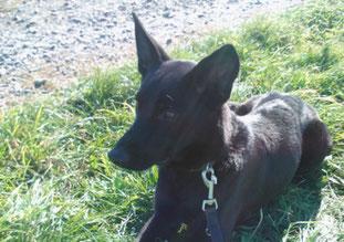 Max, der Hund von Hundephysiotherapeutin Heike Amthor, hier noch im Tierheim