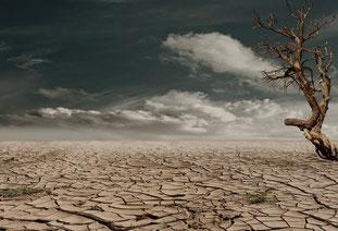 Schon das dritte Jahr in Folge ist von Dürren geprägt. (Bild: pexels.com)