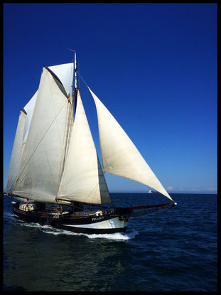 Segeln mit der Pegasus Kieler Förde Ostsee Reisen Outdoor