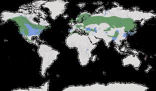 Karte zur Verbreitung des Fichtenkreuzschnabels (Loxia curvirostra).
