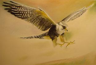 Falke 3,Pastellkreide,70x100 cm