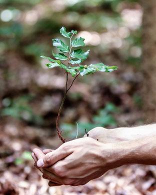 Wachsender Baum in der Hand