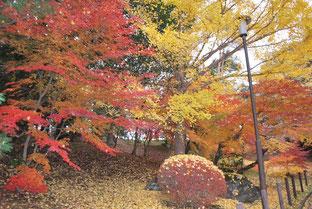 第15回「成田山公園紅葉まつり