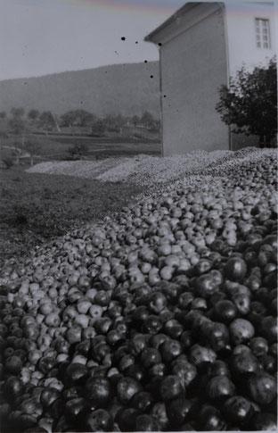Jahrhunderternte 1944: Apfellager der Genossenschaft vor dem Schulhaus (heute Gemeindehaus)