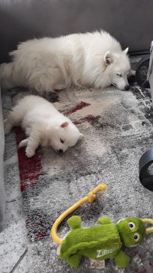 klein Chiana hat jetzt schon ein stolzes Gewicht von 1140 Gramm . Völlig erschöpft Mutter und Tochter ;-))