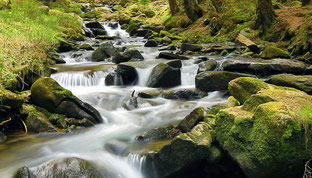 Sikkim, 100 % biologisch, Eco Tour in Sikkim