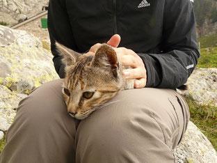 Behandlung einer Katze mit Reiki