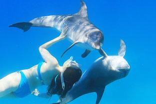 バハマドルフィンスイムクルーズツアー:イルカとドルフィンスイマー