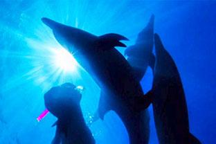 バハマドルフィンスイム:イルカとドルフィンスイマー