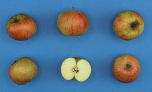 Standardisierte Fruchtbilder zur systematischen Dokumentation