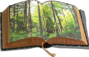 Der Wald ist ein offenes Buch - lesen wir darin!