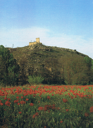 Campo de amapolas y resto de una construcción en el parque natural de la Font Roja en la Comunidad Valenciana.