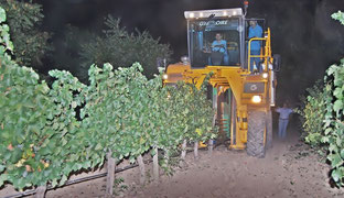 D.O.ルエダ、順調に収穫開始 (www.vinetur.com)