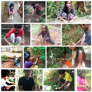 SNSなどを通じて、子どもたちから植栽の報告が寄せられた