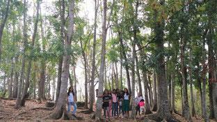 2008年からの活動でこんなに大きな学校の森ができました!