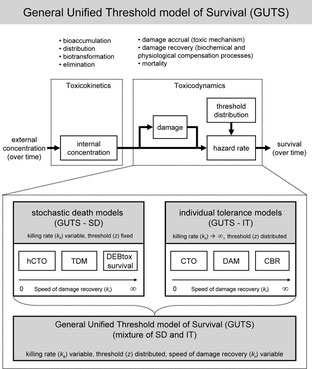 Schematic structure of the general unified threshold model of survival (GUTS), a toxicokinetic-toxicodynamic (TKTD) model