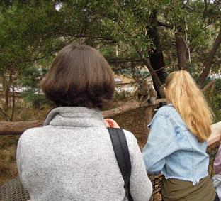 Koalas hautnah im Koala Conservation Center auf Philip Island. Foto: Chr. Schumann