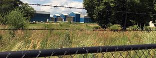 Die Ferkelzuchtanlage in Gladau Bildrechte: MDR/Isabell Hartung