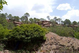 Pinares de Rodeno, en la Sierra de Albarracín. ©Mariano Belenguer