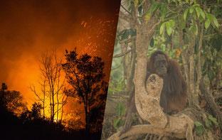 Fotos: Greenpeace