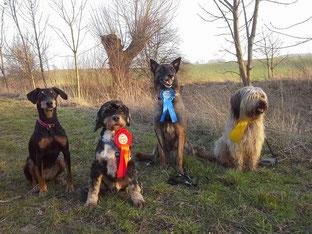 Die Teams von Wittgensdorf Quendi, Otto, Mia und Aila