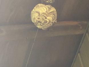 軒下に作った蜂の巣