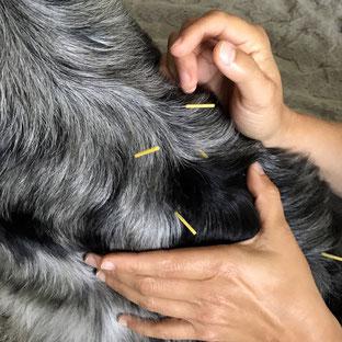 Akupunkturbehandlung schmerzhafter unterer Rücken